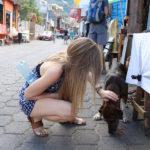 dog guatemala